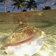 A Conch Shell Rests Beneath The Clear Art Print