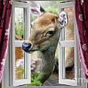 A Deer Enters The House Window. Art Print