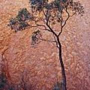 A Desert Bloodwood Tree Against The Red Art Print by Jason Edwards