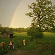 A Double Rainbow Arcs Over A Field Art Print