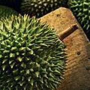 A Durian Fruit - Popular In South East Art Print by Justin Guariglia