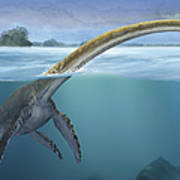 A Elasmosaurus Platyurus Swims Freely Art Print