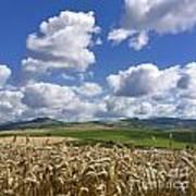 A Field Of Barley . Auvergne. France Art Print