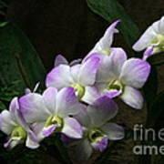 A Flight Of Orchids Art Print