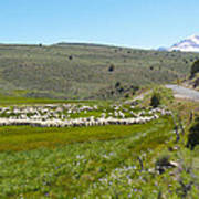A Flock Of Sheep 2 Art Print