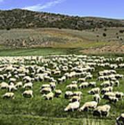 A Flock Of Sheep Art Print