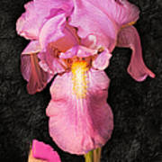 A Flora Is Natures Painting Art Print