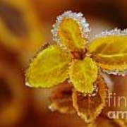 A Frosted Plant Art Print