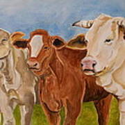 A Gathering Of Cows Art Print