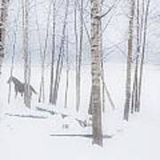A Horse Stands Beside A Forest Of Bare Art Print