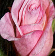 A Kiss By A Rose Art Print