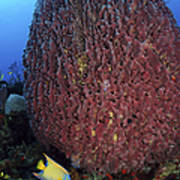 A Large Barrel Sponge With Queen Art Print