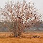 A Leafless Tree That Is Home To A Large Number Of Big Birds In The Middle Of A Ground Art Print