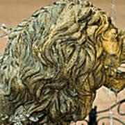 A Lion In Summer Art Print