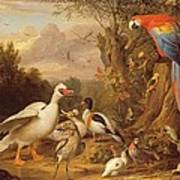 A Macaw - Ducks - Parrots And Other Birds In A Landscape Art Print