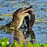 A Meal Fit For A Gator Art Print