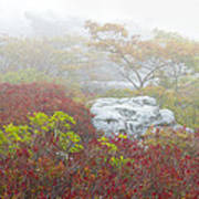 A Natural Garden At Dolly Sods Wilderness Area Art Print