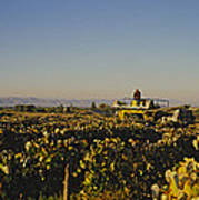 A Panoramic View Of A Vineyard Art Print