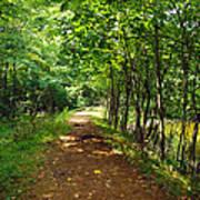 A Path Around The Pond Art Print