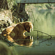 A Pet Dog Sits In The Shallow Water Art Print