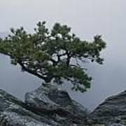 A Pine Tree Clings To A Rocky Ridge Art Print