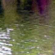 A Pond Reflection - Water Art Print