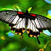 A Real Beauty Butterfly Art Print