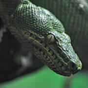 A Real Reptile Art Print