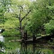 A River Runs Through Central Park  Art Print