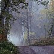 A Road Through A Misty Wood Art Print