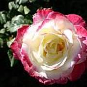 A Rose From Tyler Art Print