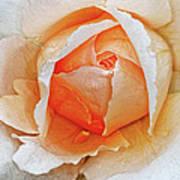 A Roses Tear Art Print