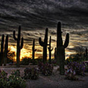 A Saguaro Sunrise  Art Print