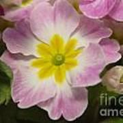 A Shy Flower  Art Print