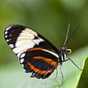 A Side View Of A Butterfly Art Print by Taylor S. Kennedy