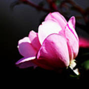 A Simple Rose Art Print