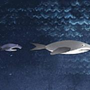 A Small Fish Chasing A Shark Art Print