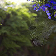 A Spider Web In A Garden Art Print by Taylor S. Kennedy