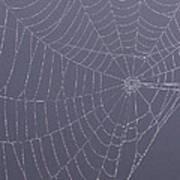 A Spider's Handiwork Art Print