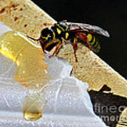 A Taste Of Honey Art Print