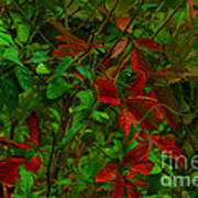 A Touch Of Christmas In Nature Art Print