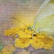 A Touch Of Yellow Art Print by Betty LaRue
