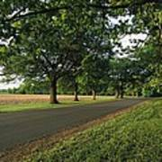 A Tree-lined Rural Virginia Road Art Print