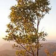 A Tree Outlined By The Rays Of The Setting Sun At Pachmarhi Art Print