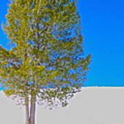 A Trees Shadow Art Print