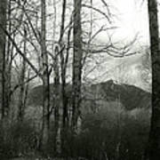 A View Through The Trees Bw Art Print