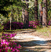 A Walk In The Springtime Woods Art Print