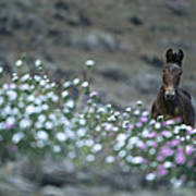 A Wild Horse On A Wildflower Covered Art Print