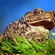 A Worm's Eye View Art Print