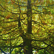 Abstract Foliage Art Print